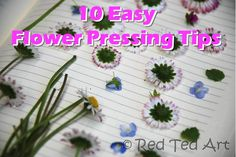 Secret Tip: you can blast your pressed flowers in the microwave to speed up the pressing process! Read more about it...