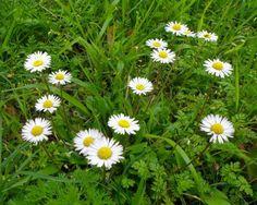 Spring Edible & Wild Plants