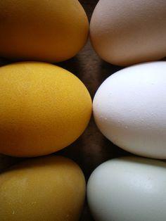 turmeric-dyed eggs