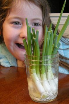 Watch green onions grow from kitchen discards