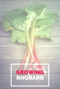 Tips and Tricks for Growing Your Own Rhubarb - Mad in Crafts