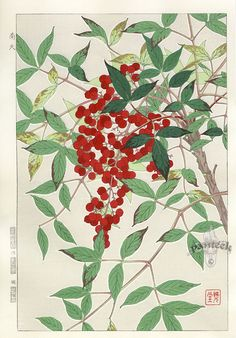 Shodo Kawarazaki, Cherry Laural #brushpainting #fineline #Ink and Wash Painting #Chinese Art #Japanese Art