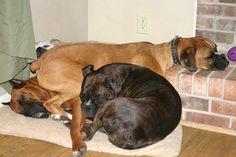 Dog pile!