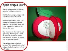 stages of an apple craftivity