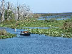 Can't wait until the kids are older so that we can go fishing on Lake Okeechobee!