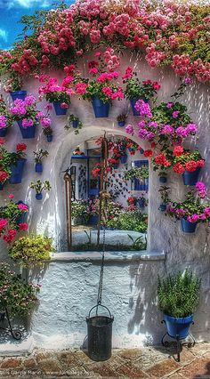 Courtyard in Cordoba, Spain - just what you need to see on a grey day in Scotland!