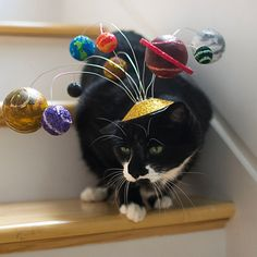 What can we say? This unique planetary costume is definitely the cat's meow (if you can get your cat to keep the hat on!).