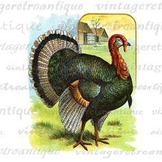 Vintage high quality digital classic color turkey illustration graphic for transfers, making prints, and other great uses. Real antique artwork. Great for Etsy. High quality at 8½ x 11 inches large. Transparent background version included with every graphic. Stock up and save Save up to 50% on your order, see below to find out how.