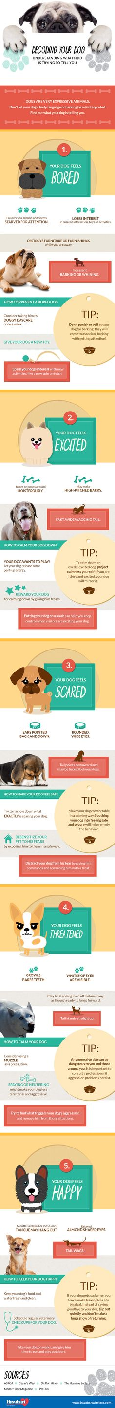 Decoding Your Dog: W