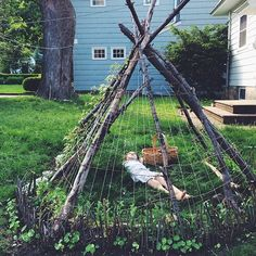 Tipi with sugar snap peas and nasturtiums.
