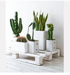 #ideas para #reciclar #palets  #plantas