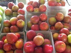 Alderman Plums from Appleberry Farm.  (stone fruit season so short in MInnesota-must celebrate)
