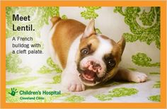 A puppy with cleft palate teaches kids tolerance. Tips to talk about Lentil to help your child embrace differences.
