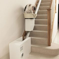 doggie stair-lift! I. I need one in my future home.