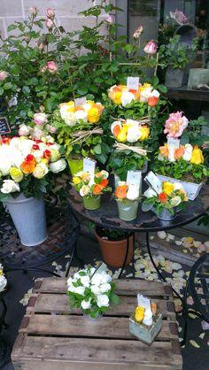 Au nom de la rose, St Germain, Paris