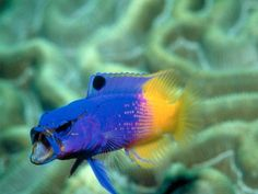 Cool fish aquariums i want on pinterest 61 pins for Cool saltwater fish