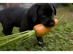 List of Fruits & Vegetables Dogs Can Eat