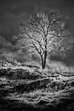 One Lonely Day by Juha Roisko