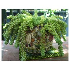 House plant ideas and care on pinterest best indoor for Large non toxic house plants
