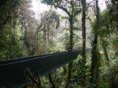 pura vida Costa Rica. pura vida, favorit place, special trip, vida costa, costa rica, dream trip, mi costa