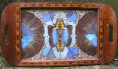 Butterfly Wing Tray, ebay buy now price 103. (in England)