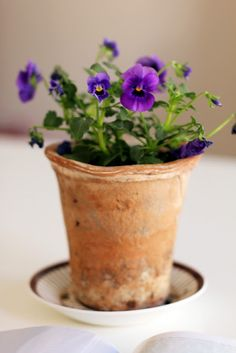 purple flowers, violet, pansies, terracotta pots, garden, seventeendoor