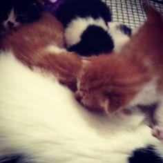 Kittens we met in September kitten