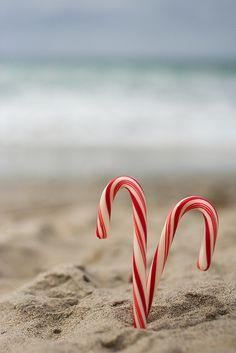 christmas cards, beachi christma, beach christmas, christmas beach, holiday cards, at the beach, candi cane, candy canes, florida christmas