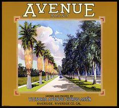 Avenue Brand Oranges