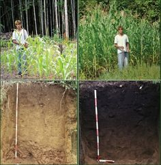 Terra preta (dark earth) from biochar clearly seen on the right with enhanced crop growth.  The agricultural benefits of the right biochar is one of the keys to success, together with power generation and carbon sequestration.