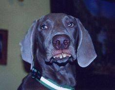redneck doggie