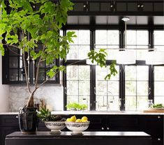 fig tree and black kitchen - gorgeous