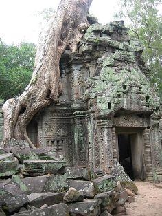 ) Ta Prohm temple, Cambodia