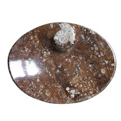 Now this is cool!  #Fossil #Dishes #Ammonite #Dish #fossil #sale