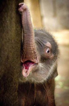 elephants, babi anim, critter, babi eleph, cuti