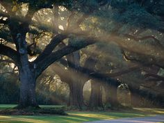 National Geographic's Drives of a Lifetime:  Creole Country, Louisiana