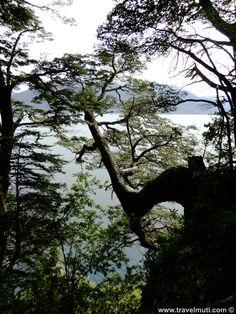 villa-la-angostura #imagineforestnation