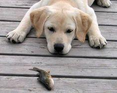 good pup.