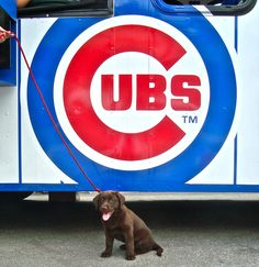Even puppies enjoy the #Cubs Trolley!