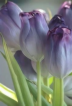 Purple Tulips true colors, shades of purple, purple flowers, coloring, violets, gardens, purpl tulip, beauty, tulips