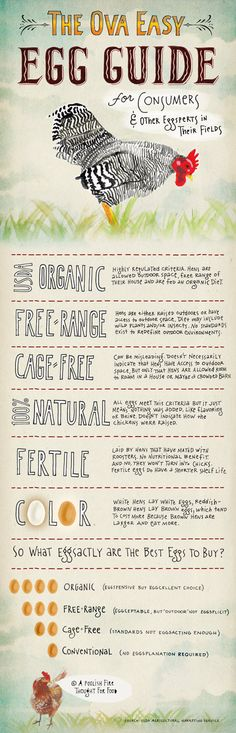 The Ova Easy Egg Guide
