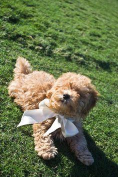 Teddy!