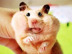 -Hamster!
