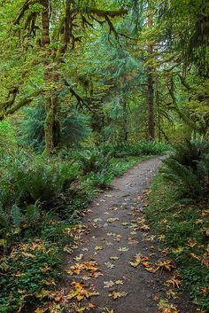 Autumn in The Woods - Olympic National Park, Washington