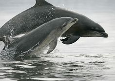 """Dolphins should live wild and free say NO to captivity and senseless slaughter in Taiji Japan. See the movie """"The Cove"""""""