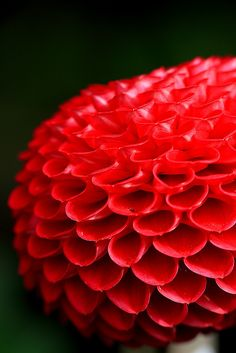 Beautiful Red Bloom