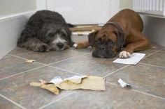 Homemade Pet Safe Floor Cleaners