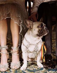 bejeweled french bulldog