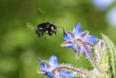 The Green Phone Booth: Poisoning Paradise: Are Your Plants Killing Bees?