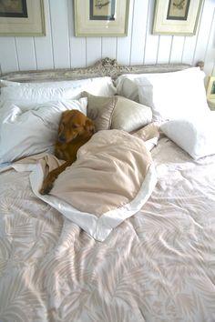 So sweet.  My dogs like to lay and sleep like humans too.
